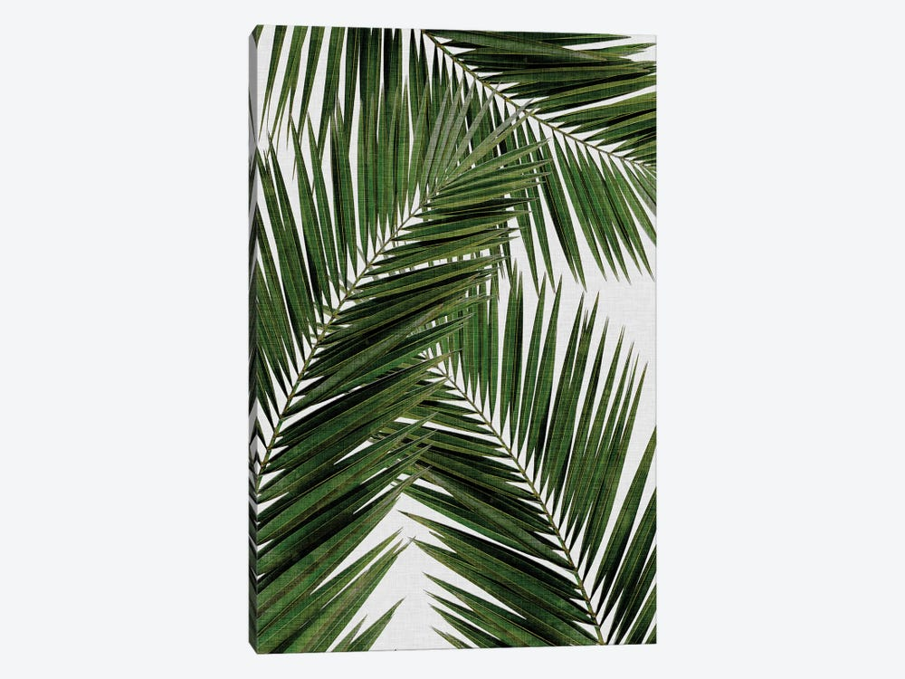 Palm Leaf III by Orara Studio 1-piece Canvas Artwork