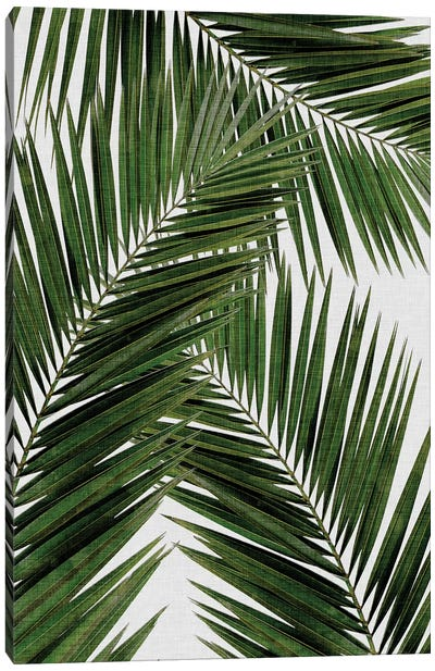 Palm Leaf III Canvas Art Print