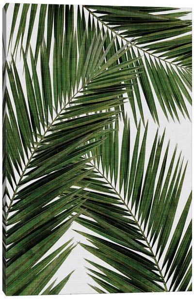 Palm Leaf III Canvas Art Print