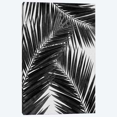 Palm Leaf III B&W Canvas Print #ORA177} by Orara Studio Canvas Artwork