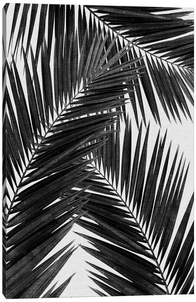 Palm Leaf III B&W Canvas Art Print