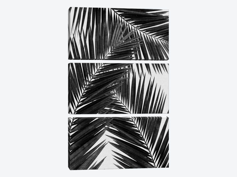 Palm Leaf III B&W by Orara Studio 3-piece Canvas Art Print