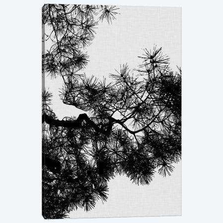 Pine Tree Canvas Print #ORA190} by Orara Studio Canvas Art Print