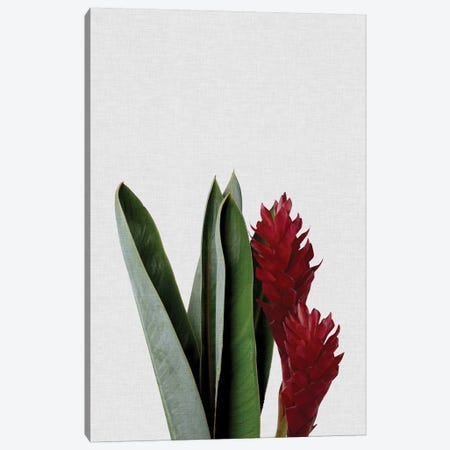 Red Flower Canvas Print #ORA197} by Orara Studio Canvas Artwork