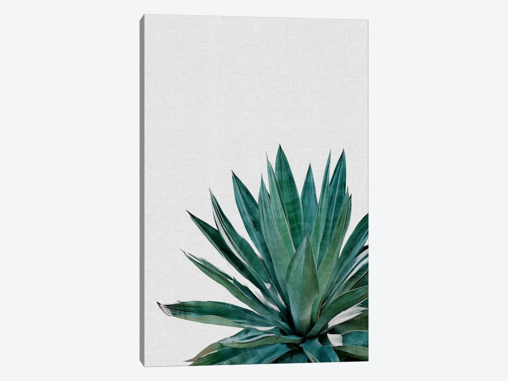Agave Cactus by Orara Studio 1-piece Canvas Art