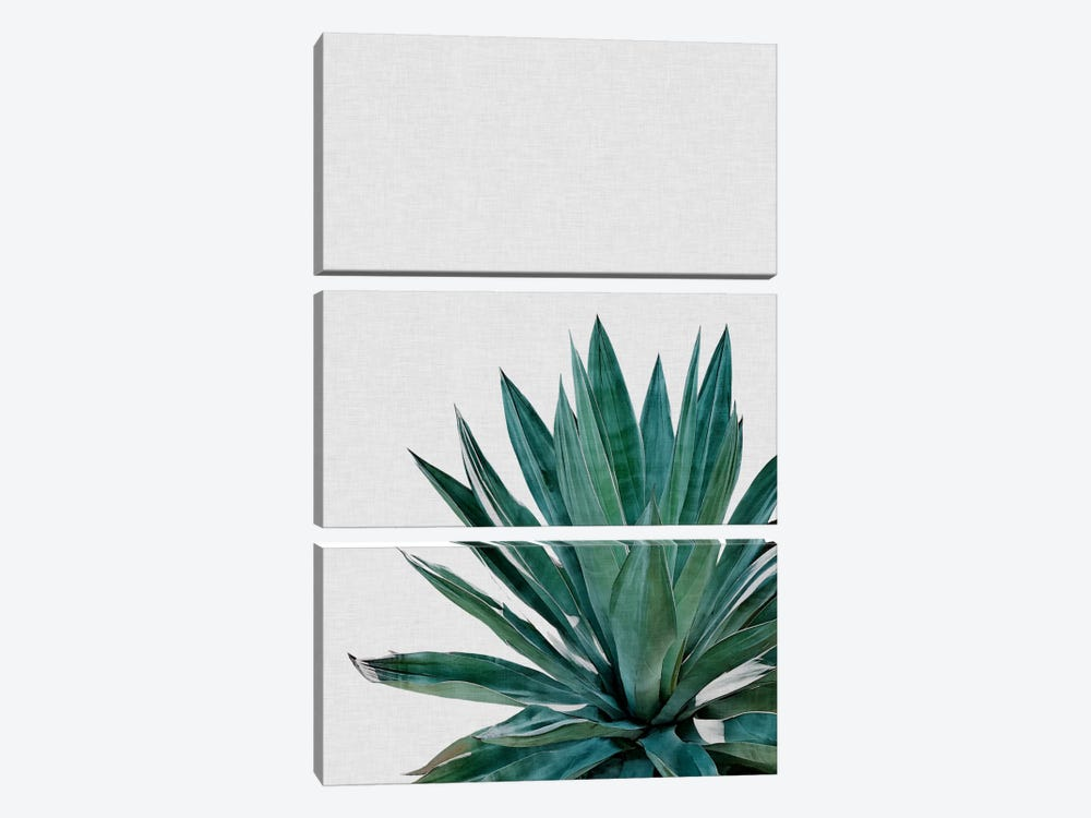 Agave Cactus by Orara Studio 3-piece Canvas Art