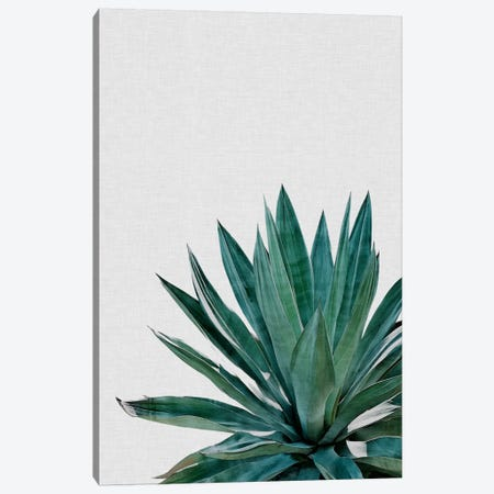 Agave Cactus Canvas Print #ORA1} by Orara Studio Canvas Art