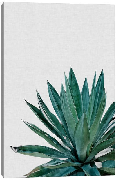 Agave Cactus Canvas Art Print