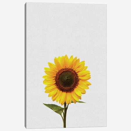 Sunflower Canvas Print #ORA214} by Orara Studio Canvas Art Print