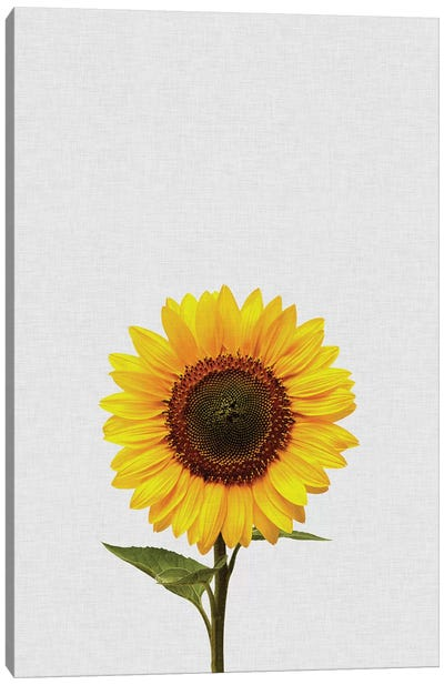 Sunflower Canvas Art Print
