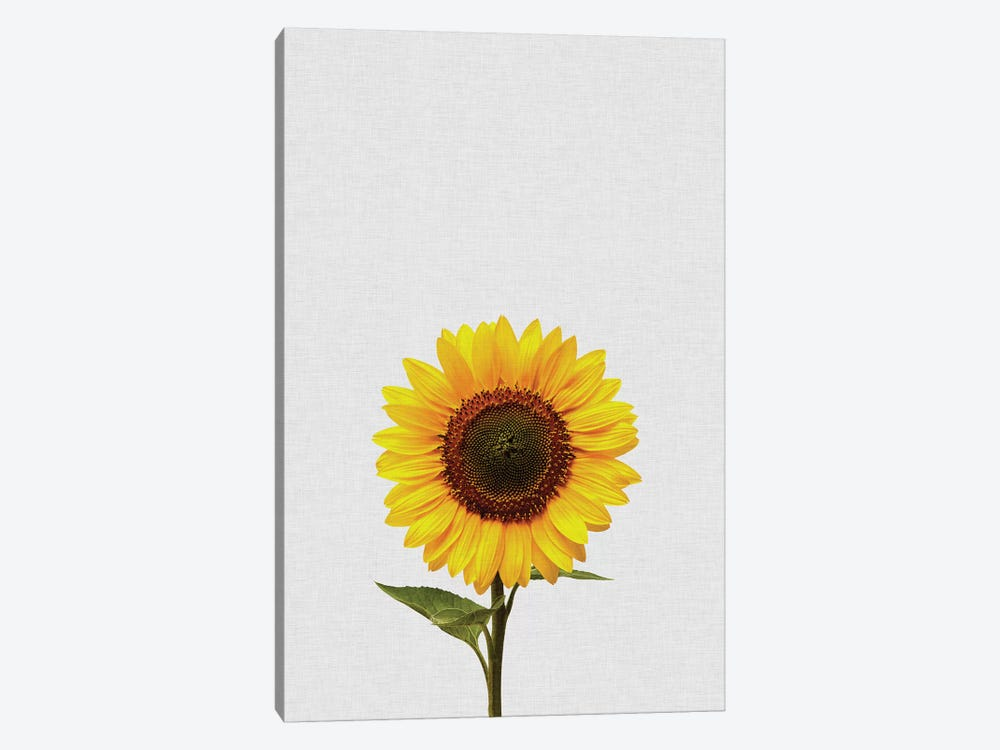 Sunflower by Orara Studio 1-piece Canvas Wall Art