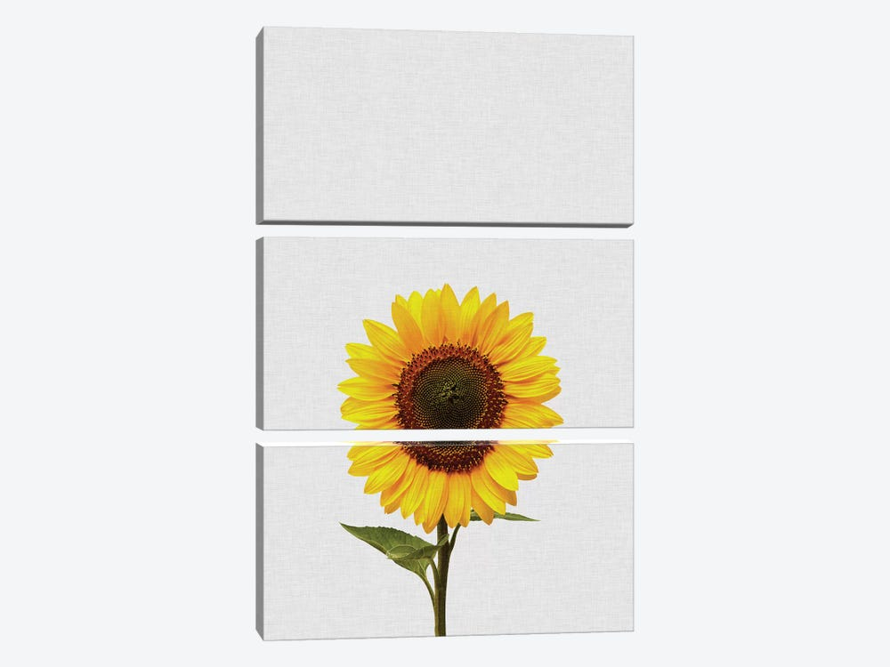 Sunflower by Orara Studio 3-piece Canvas Artwork