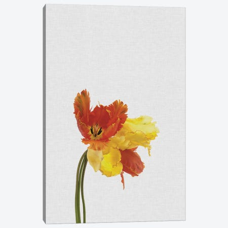 Tulip Canvas Print #ORA222} by Orara Studio Canvas Art Print