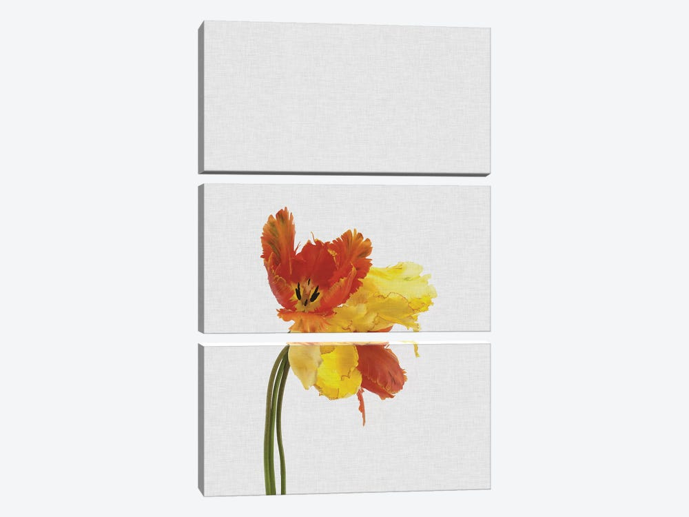 Tulip by Orara Studio 3-piece Canvas Art Print