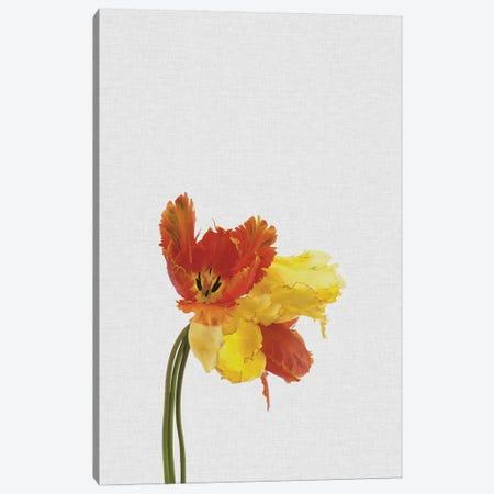 Tulip Canvas Print #ORA222} by Orara Studio Canvas Art Print