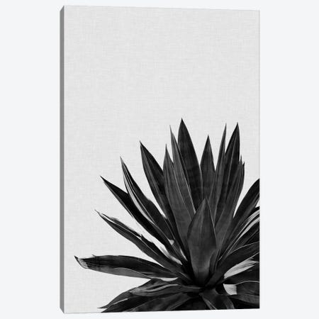 Agave Cactus B&W Canvas Print #ORA2} by Orara Studio Canvas Wall Art