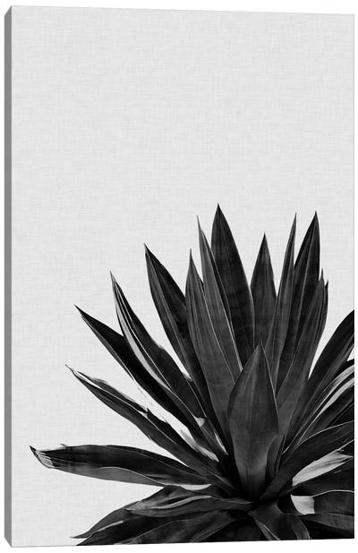 Agave Cactus B&W Canvas Art Print