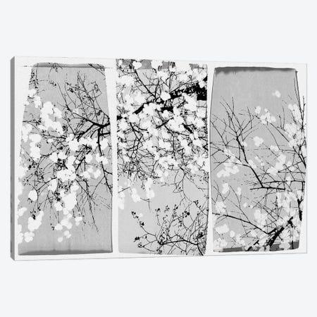 Oriental Blossom Canvas Print #ORA331} by Orara Studio Art Print