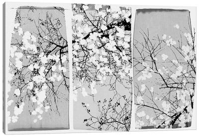 Oriental Blossom Canvas Art Print