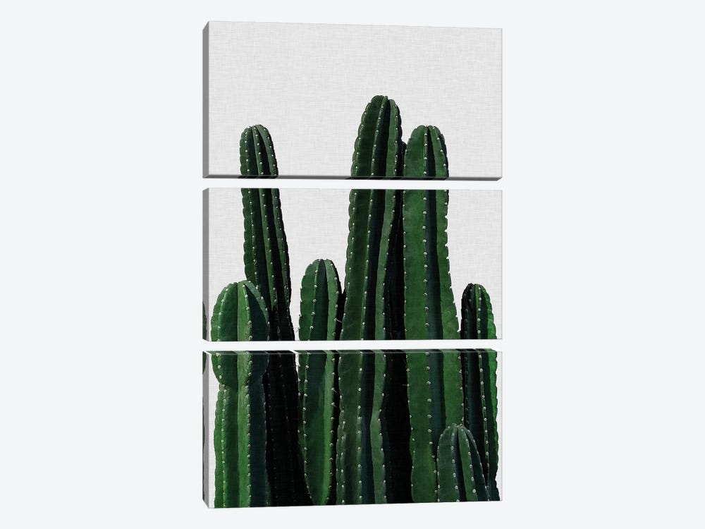 Cactus I by Orara Studio 3-piece Canvas Print