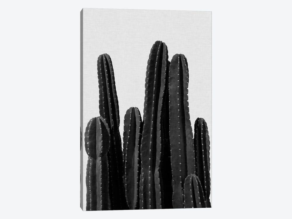 Cactus I B&W by Orara Studio 1-piece Canvas Wall Art