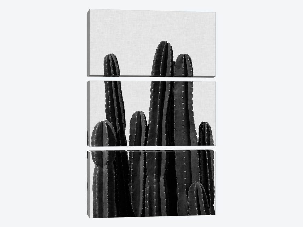 Cactus I B&W by Orara Studio 3-piece Canvas Art