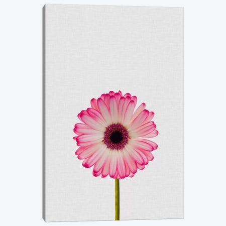 Daisy Canvas Print #ORA56} by Orara Studio Canvas Print