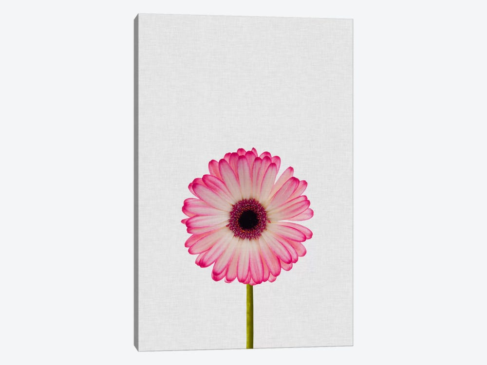 Daisy by Orara Studio 1-piece Canvas Artwork