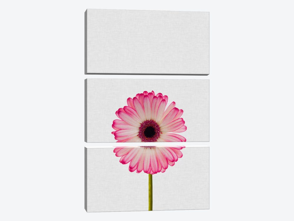 Daisy by Orara Studio 3-piece Canvas Wall Art