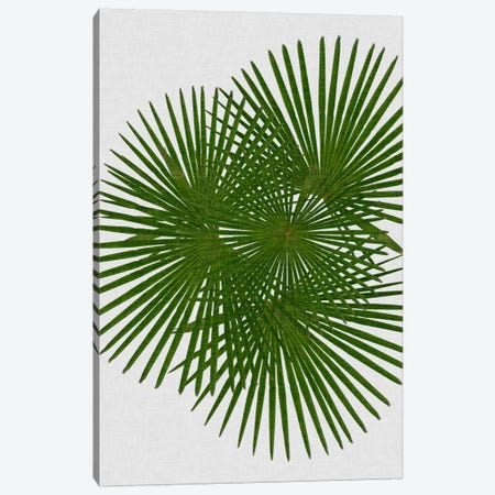 Fan Palm Canvas Print #ORA65} by Orara Studio Canvas Artwork