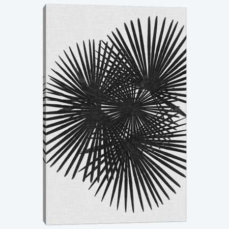 Fan Palm B&W Canvas Print #ORA66} by Orara Studio Canvas Wall Art