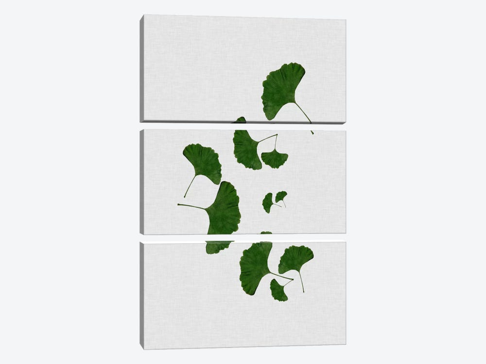 Ginkgo Leaf I by Orara Studio 3-piece Canvas Wall Art