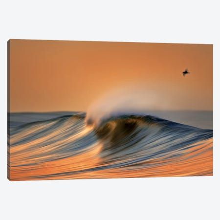 Colorful Wave and Bird Canvas Print #ORI10} by David Orias Canvas Artwork