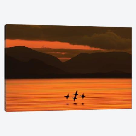 Ducks at Dawn  Canvas Print #ORI14} by David Orias Art Print