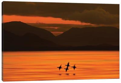 Ducks at Dawn  Canvas Art Print