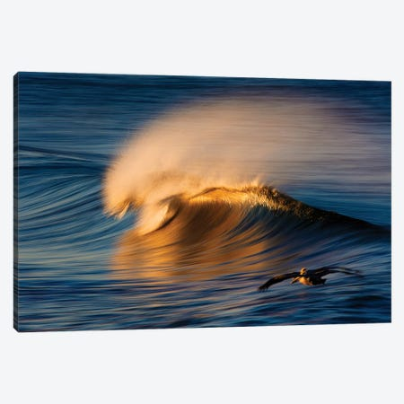 2 Pelicans and Wave Canvas Print #ORI1} by David Orias Canvas Artwork