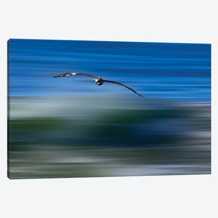 Pelican Abstract Canvas Print #ORI22} by David Orias Art Print