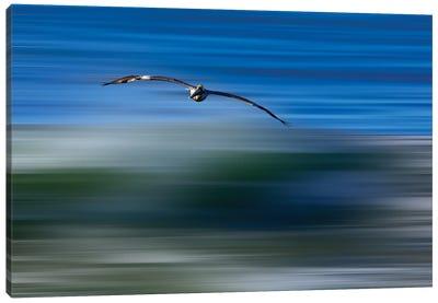 Pelican Abstract Canvas Art Print