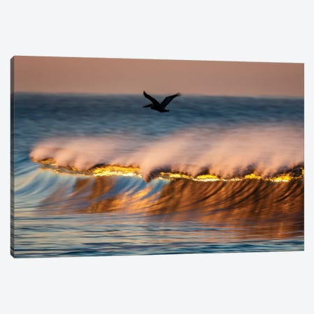 Pelican And Golden Crest Wave Canvas Print #ORI23} by David Orias Canvas Art Print