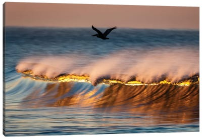 Pelican And Golden Crest Wave Canvas Art Print