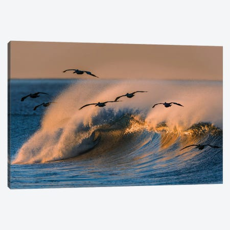 Pelican Flock and Wave Canvas Print #ORI25} by David Orias Canvas Artwork