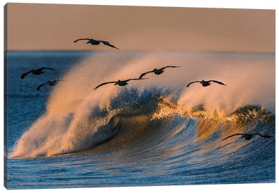 Pelican Flock and Wave Canvas Art Print