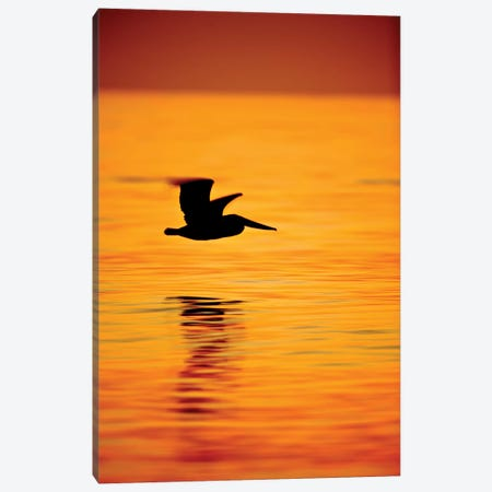 Pelican Silhouette Canvas Print #ORI26} by David Orias Canvas Wall Art