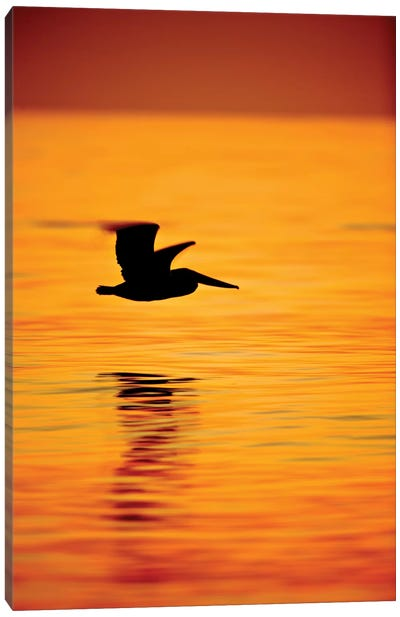 Pelican Silhouette Canvas Art Print