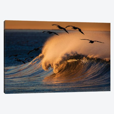 Pelicans and Breaking Wave Canvas Print #ORI27} by David Orias Canvas Art