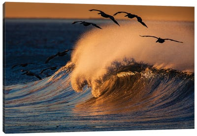 Pelicans and Breaking Wave Canvas Art Print