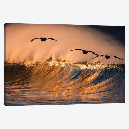 3 Pelicans and Wave Canvas Print #ORI2} by David Orias Canvas Wall Art