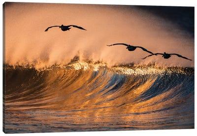 3 Pelicans and Wave Canvas Art Print
