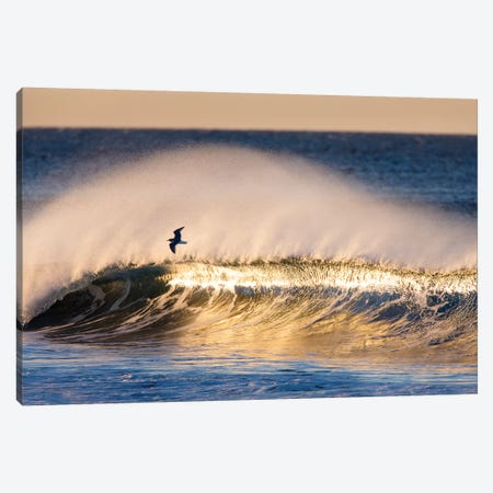 Seagull and Wave 3-Piece Canvas #ORI30} by David Orias Canvas Artwork