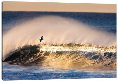 Seagull and Wave Canvas Art Print